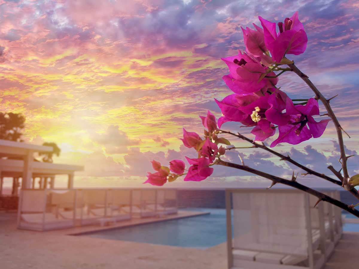 Flowers bloom poolside as sun sets over Atlantic Ocean
